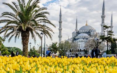 Wonderful Turki Tulip